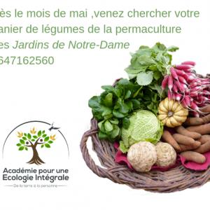 panier légume permaculture