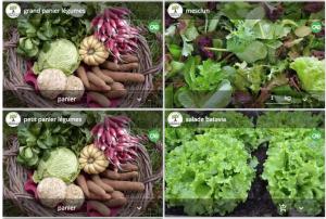 Nouveaux légumes à vendre